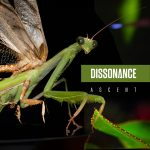 Dissonance_Ascent