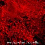 Ace Reporter - Arcadia EP